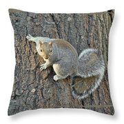 Gray Squirrel - Sciurus Carolinensis Throw Pillow