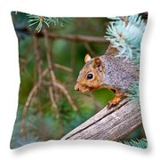 Gray Squirrel Pictures 93 Throw Pillow