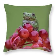 Gray Tree Frog Throw Pillow