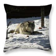 Gray Wolf 2 Throw Pillow