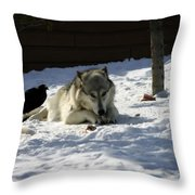 Gray Wolf 3 Throw Pillow
