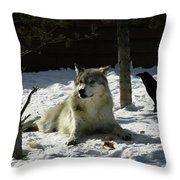 Gray Wolf 4 Throw Pillow