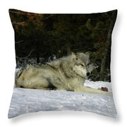 Gray Wolf 5 Throw Pillow
