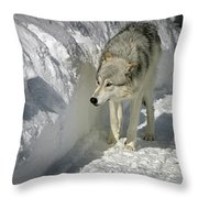 Gray Wolf 7 Throw Pillow