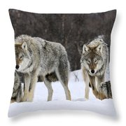 Gray Wolves Norway Throw Pillow