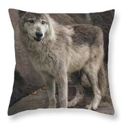 Gray Wolf On A Rock Throw Pillow