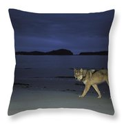Gray Wolf On Beach At Twilight Throw Pillow