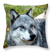 gray Wolf Pair Throw Pillow