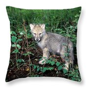 gray Wolf Pup in Woods Throw Pillow