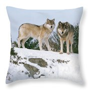 Gray Wolves Canis Lupus In A Forest Throw Pillow