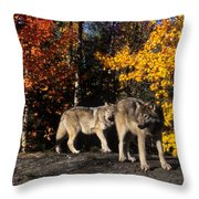 Gray Wolves In Autumn Throw Pillow