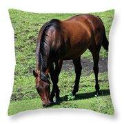 Grazing Bay Throw Pillow