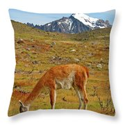 Grazing Guanaco In Patagonia Throw Pillow