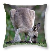 Grazing Kangaroo Throw Pillow