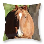 Grazing Mare  Throw Pillow