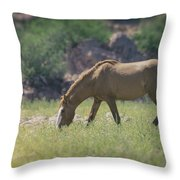 Grazing Wild Mustang  Throw Pillow