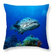 Great Barrier Reef Throw Pillow by Peter Stone - Printscapes