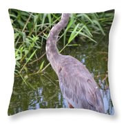 Great Blue Heron Closeup Throw Pillow