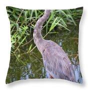Great Blue Heron Closeup Throw Pillow