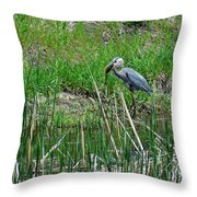 Great Blue Heron Series 5 Of 10 Throw Pillow