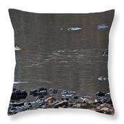 Great Blue Heron Wading 1 Throw Pillow