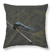 Great Blue Skimmer Dragonfly Throw Pillow