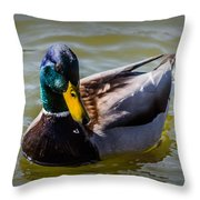 Great Day For A Swim Throw Pillow