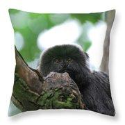 Great Face Of Goeldi's Marmoset Throw Pillow