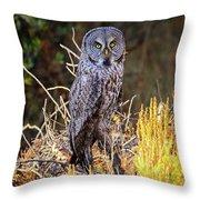 Great Grey Owl Portrait Throw Pillow