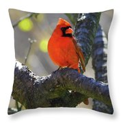 Great  Perch Male Northern Cardinal Throw Pillow