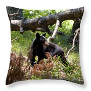 Great Smoky Mountain Bear Throw Pillow