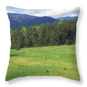 Great Smoky Mountains Deer Grazing In Field Throw Pillow