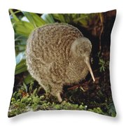 Great Spotted Kiwi Apteryx Haastii Male Throw Pillow by Tui De Roy