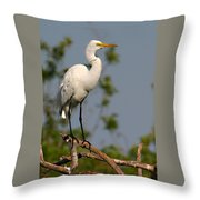 Great White Egret Pose Throw Pillow