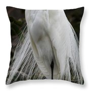 Great White Egret Windblown Throw Pillow