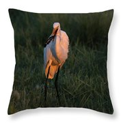Great White Egret With Armored Catfish Throw Pillow