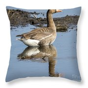 Great White Fronted Goose Throw Pillow