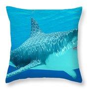 Great White Shark Undersea Throw Pillow