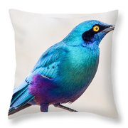 Greater Blue-eared Starling Throw Pillow