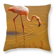 Greater Flamingo In The Water At Galapagos Islands Throw Pillow