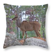 Greater Kudu Female - Rdw002756 Throw Pillow