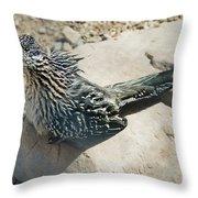 Greater Roadrunner Throw Pillow