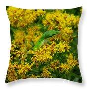 Green Anole Hiding In Golden Rod Throw Pillow