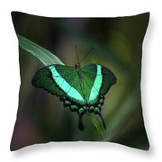 Green-banded Peacock- 2 Throw Pillow