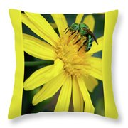 Green Bee On Yellow Daisy Throw Pillow