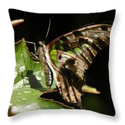 Green Checkered Skipper Throw Pillow