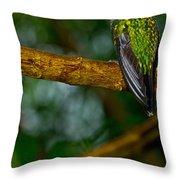 Green-crowned Brilliant Hummingbird Throw Pillow