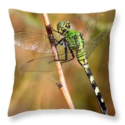 Green Dragonfly Closeup Throw Pillow