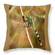Green Dragonfly Closeup Throw Pillow