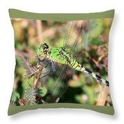 Green Dragonfly Macro Throw Pillow